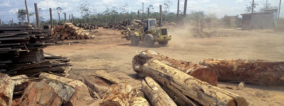 Brasilien: Rodung des Regenwalds